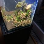 Bonsai-Becken Neustart 4