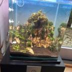 Bonsai-Becken Neustart 2