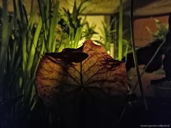 nightlife suchbild zwergkugel