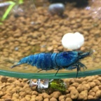 dunkles Blau