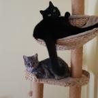 Unsere beiden Katzendamen Lilli und Lulu.