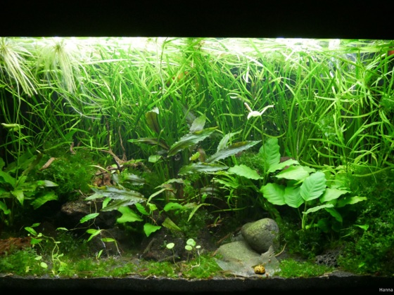 Mein 125l Dschungel