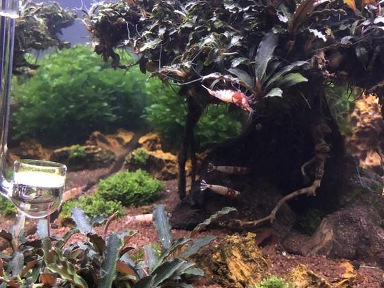 Bonsai update März