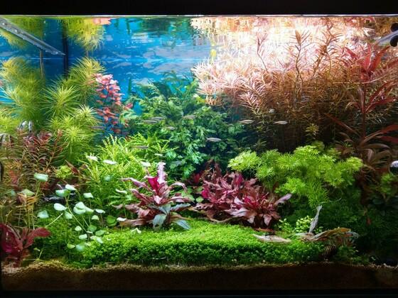 Mein Dschungel
