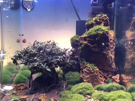 Bonsai Becken update