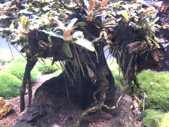 Der Bonsai Baum
