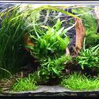 Aquarium am 3.3.2020