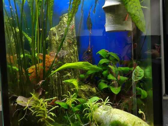 Mein Hochkant-Aquarium
