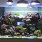 50l Scapers Tank Meerwasser