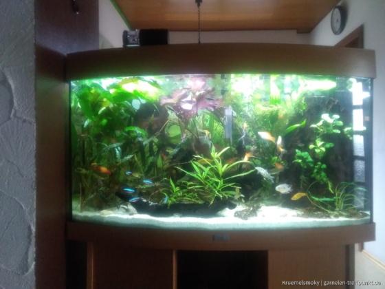 180 l Gesellschaftsecken für die Fische
